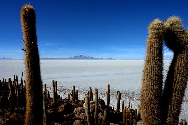 Isla Incahuasi con sus cactus gigantes