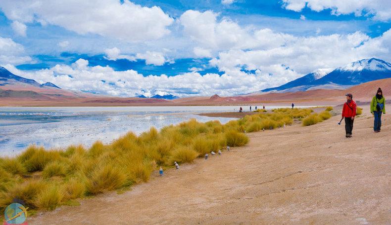 Laguna Hedionda, Tour Salar de Uyuni